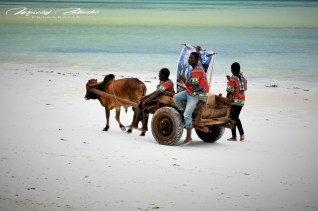 Zanzibar-Masajowie-Masajki-Ocean-Owoce-warzywa-plaża-ludzie-Małpka-Fot.Macie-49