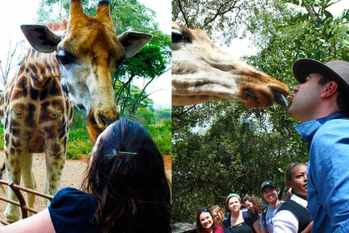 Kenya Giraffe Centre, Kenya, Giraffe Centre, Nairobi, Kiss