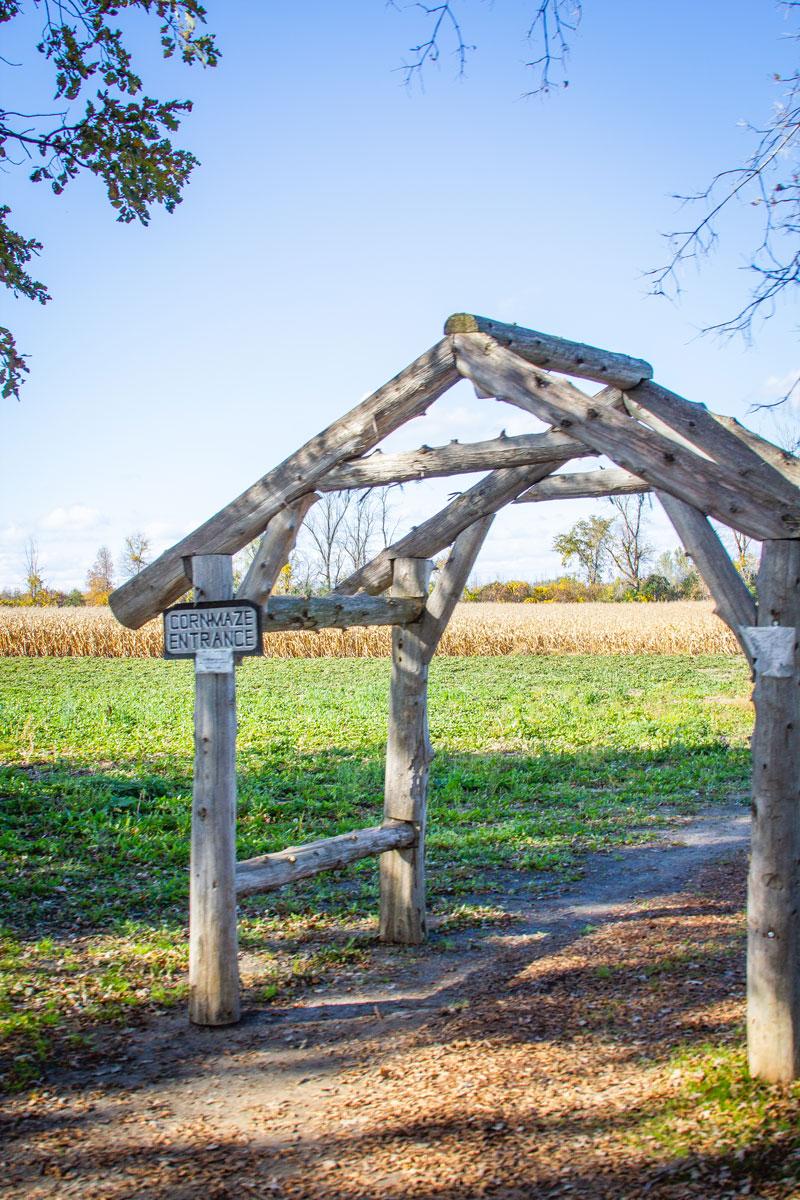corn maze, farm, ontario, ottawa