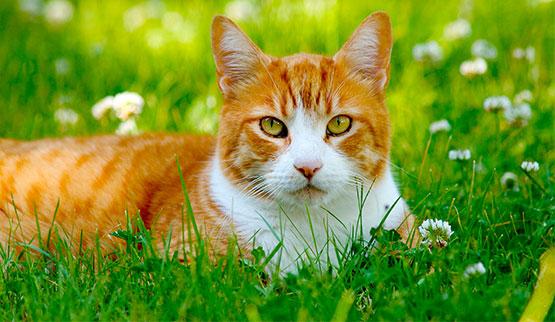 Starostlivosť o mačací kožúšok | Macka.sk - prvá slovenská mačacia sieť