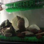 亀、水槽、水草を入れて、巻貝を立ててみた