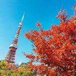 【プリンス芝公園・東京】東京タワーと紅葉が一緒に見れる紅葉が見頃、2018.11.28