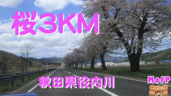 堤防に沿って3キロ以上つづくソメイヨシノの桜並木 秋田県,湯沢市,役内川