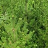 モフモフした植物が創る不思議な世界,房総フラワーライン,千葉県