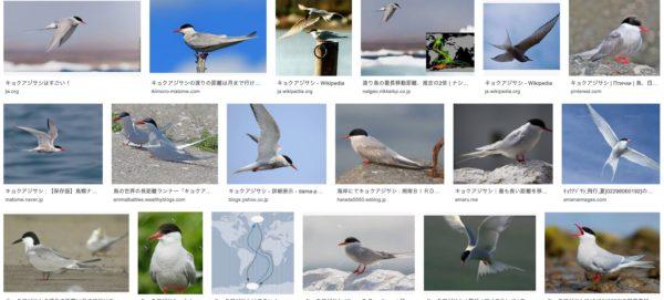 渡り鳥 キョクアジサシ 南極から北極 片道 4万キロ 往復 8万キロを飛ぶ