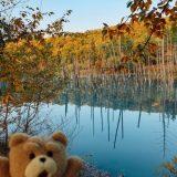 ~青い池~北海道~道の駅・白金ビルケからの紅葉と青い池の散歩