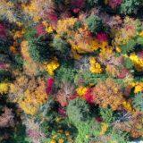 ~大雪高原の紅葉~~北海道の紅葉ドライブ2019~絶景~空撮 その2/4