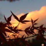 東京の紅葉~砧公園~後編~2019年12月上旬