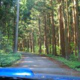 【水芭蕉の森】静かでいいところですが、水芭蕉は、まだでした。アヤメが綺麗でした。群馬県、片品村