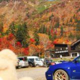 【大雪高原】北海道・紅葉・絶景【ドローン空撮】 Mavic 2 Pro DJI