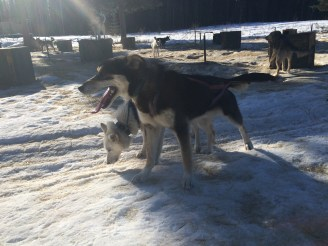 Spark 1st run in lead at 9 months of age