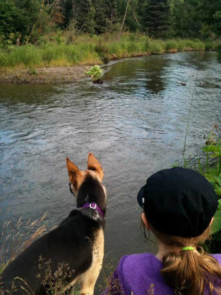 Minty and Iz looking at a beaver in Campbell crk.