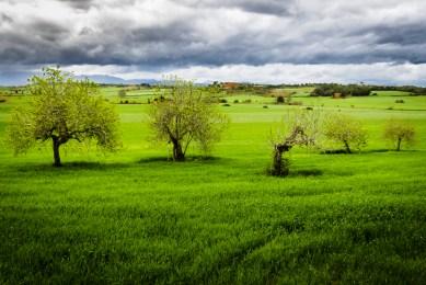 Fields of Santa Margalida