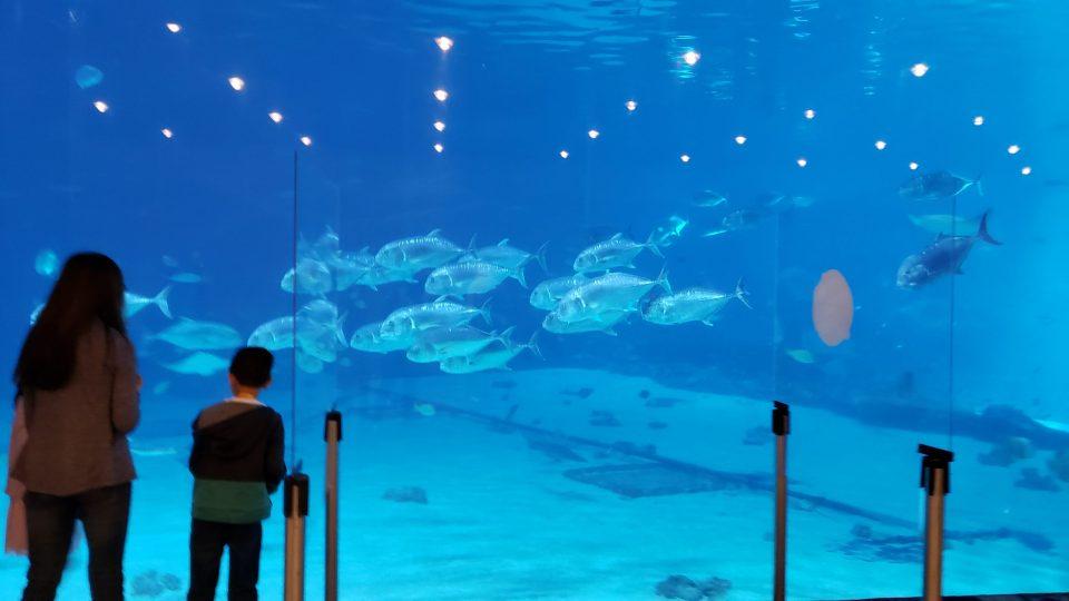 Georgia Aquarium Partitions