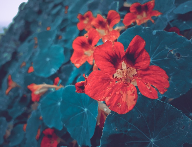 flowers-sample-preset-applied