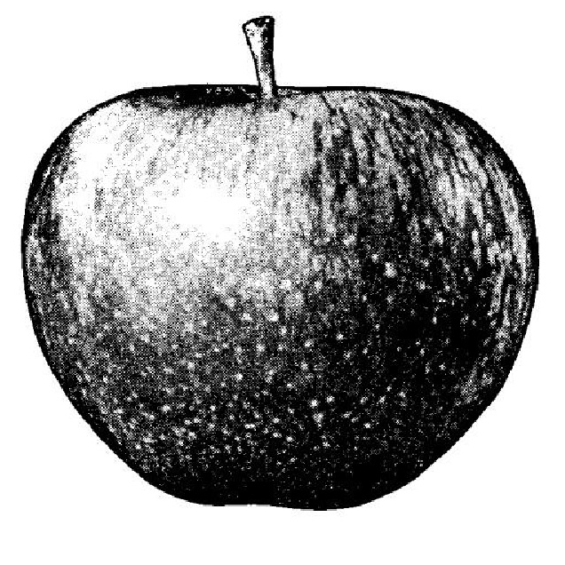 Maçã da Apple Corps