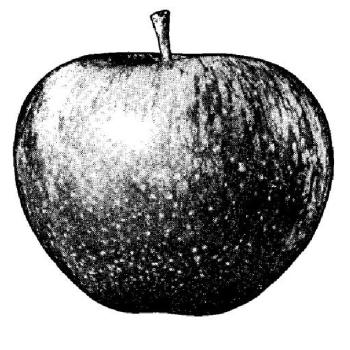 Maçã da Apple Corps