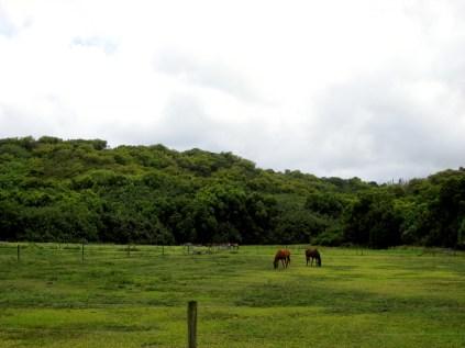 A Kaua'i Horse Ranch