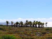 A Small Oasis near the Present-Day Lava Flow