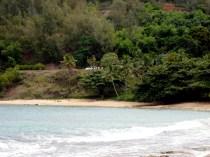 Moloaa Bay Palm Trees