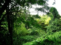 The Botanical Scenery of Akaka Falls State Park