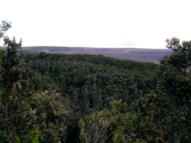 The Forest Inside the Kīlauea Caldera