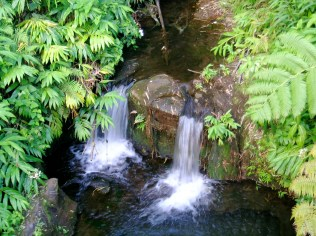 Two Small Waterfalls at Akaka Falls State Park