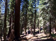 Trail of the Sequoias