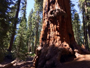 Trail of the Sequoias 15