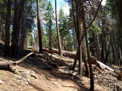 Moro Rock Trail 5