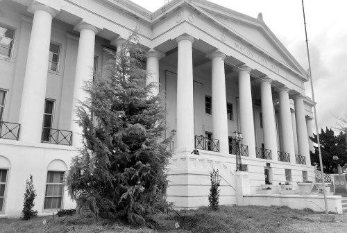 Commemorative cedar tree