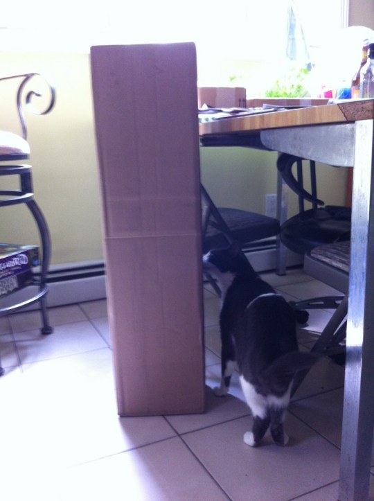 Indy inspects a box that was just delivered.