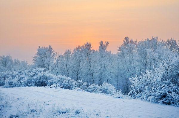 alimentación en invierno