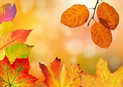curso macrobiótica otoño