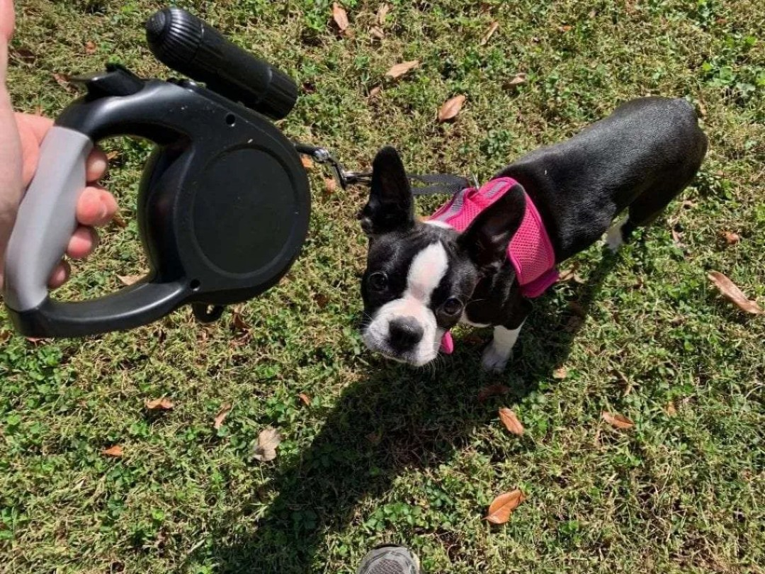 Dr. Retractable Dog Leash