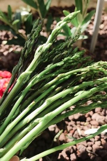 Récoltes d'asperges sauvages