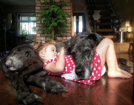 19269747_cute_big_dogs_4.limghandler