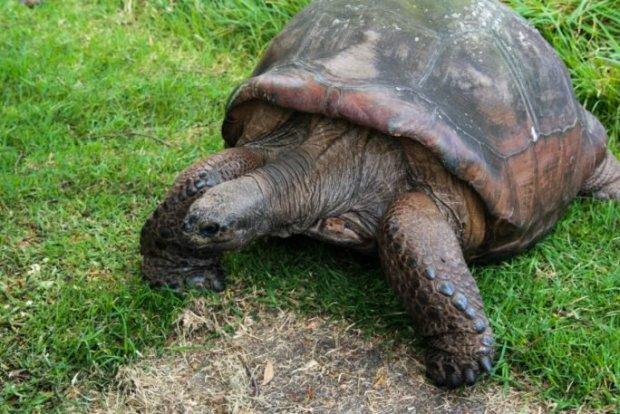πιο ηλικιωμένο ζώο στο πλανήτη