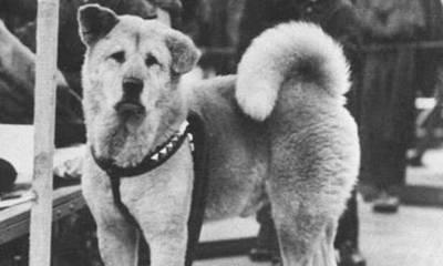 Hachiko: η ιστορία του πιο αφοσιωμένου σκύλου