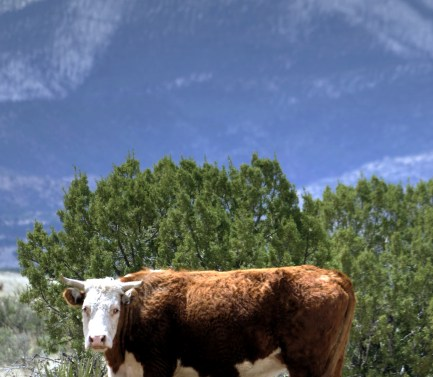 Ranching is a significant economic industry across Southern New Mexico