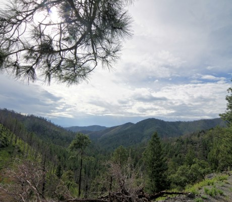 In addition to desert and prairie, Southern New Mexico has vast stretches of forest land which draw hunters and eco-tourists to the state. (Photo in Gila National Forest, Grant County, NM)