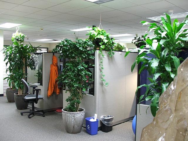 Colocando una planta en tu oficina mejorarás tu nivel de atención, disminuirás el estrés y potenciarás tu creatividad