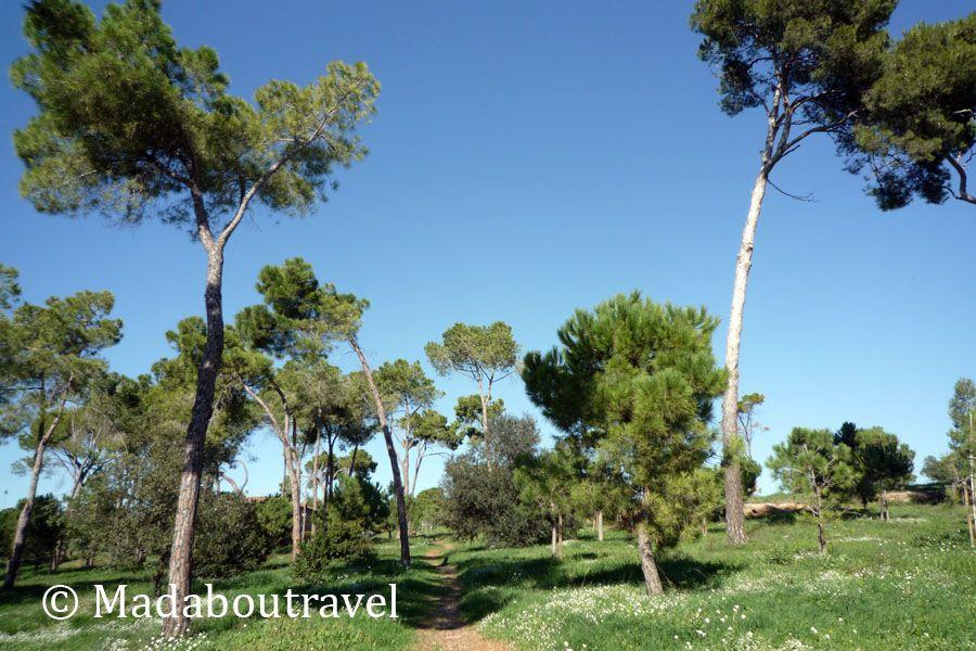 Bosc de Joaquim Falguera en la Colonia Güell
