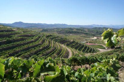 Infinito de viñas en el Priorat