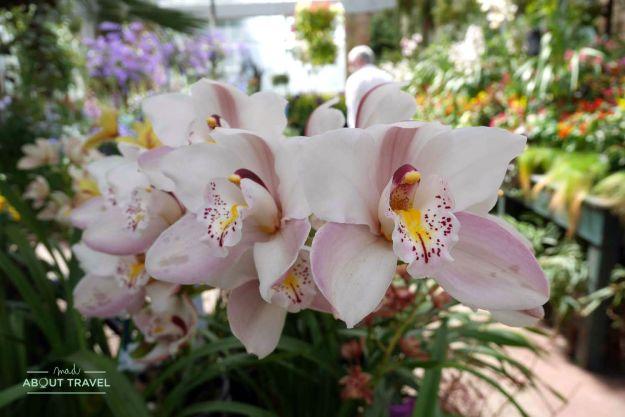 Flores en el Wintergarden de Auckland