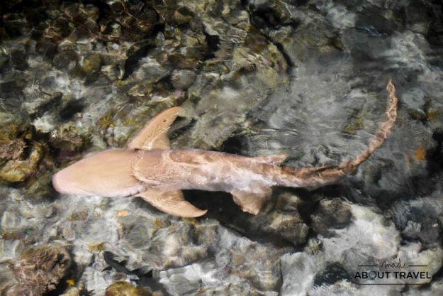 tiburones en el banyan tree resort en maldivas