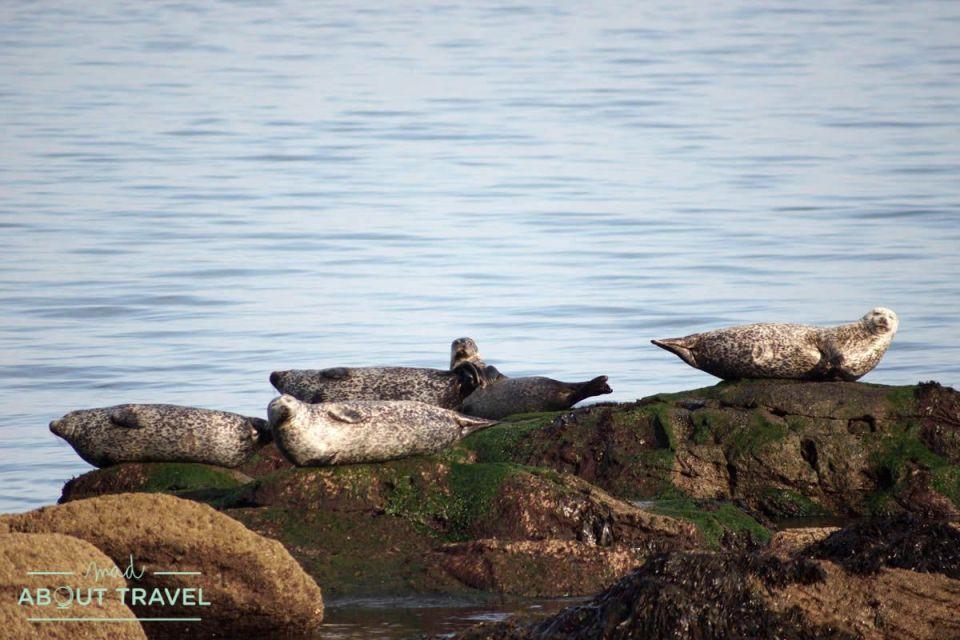 focas felices en el Fife Coastal Path, Escocia