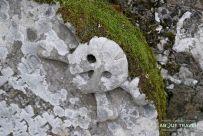 cementario antiguo de Falkland