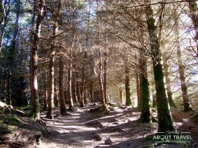 bosque del Old Man of Storr en la Isla de Skye, Escocia