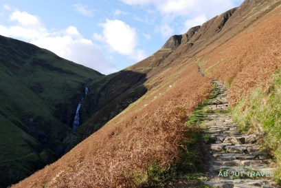 grey-mares-tail-04